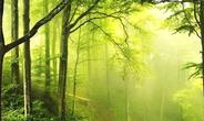 旅游地产发展的五大方向:康养、生态、文化、乡村、城镇